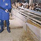 FS22/50养猪场冲洗猪圈消毒热水清洗机