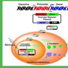 荧光素酶报告基因检测