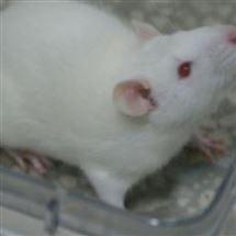 肥胖小鼠模型实验检测