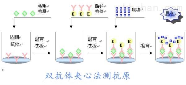 <strong><strong>人膀胱肿瘤抗原(BTA)elisa试剂盒</strong></strong>