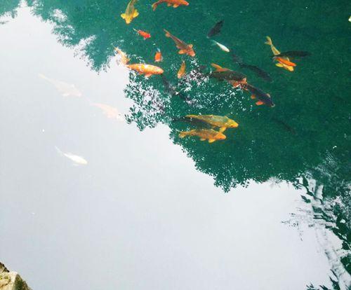 专家解读《淡水水生生物水质基准—苯酚》(2020年版)有关问题