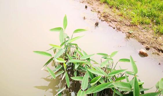 原创‖ 高排放标准污水深度处理及资源化利用系列专题研究(三)