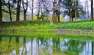 農村生活污水和黑臭水體治理典型案例  臨沂市蘭山區黑臭水體治理柳青河治理工程