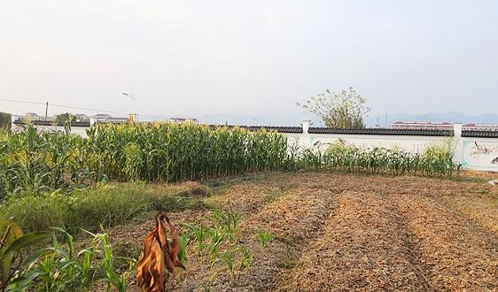 《广西壮族自治区土壤污染防治条例》印发 9月1日起实施