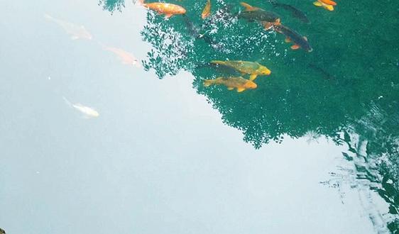 安徽省亳州市織好生態環境監測網守好環境安全屏障