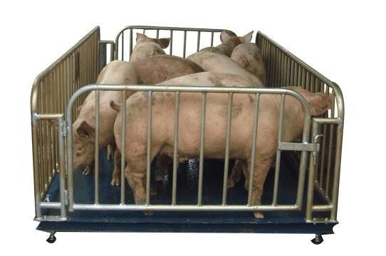 1T牲畜秤