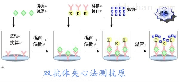 <strong><strong>小鼠脂多糖(LPS)elisa试剂盒</strong></strong>